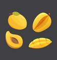mango yellow fruit isolated vector image vector image