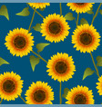 orange yellow sunflower on indigo blue background vector image vector image