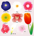 Colorful Flowers Set vector image