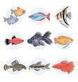 popular aquarium fishes part 2 vector image