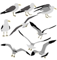 Set black silhouettes of seagulls on white vector image vector image