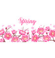 spring banner with sakura or cherry blossom vector image vector image