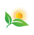 sun rise over leaves logo design template vector image