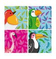 set of exotic birds vector image
