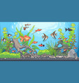 rectangular horizontal aquarium vector image vector image