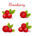 set of forest cranberry with leaves vector image