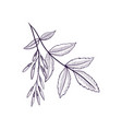 drawing branch ash tree vector image