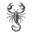 Hand drawn sketch of scorpion Tattoo animal vector image vector image