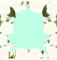 white rose flower border2 vector image vector image