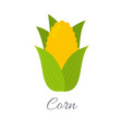 corn icon with title vector image