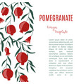 design template with pomegranate fruits hand vector image