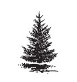 hand-drawn tree fir black and white realistic vector image vector image