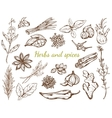 Herbs And Spices Collection vector image