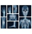 human bones realistic x-ray shots vector image vector image