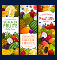 tropical fruit exotic garden farm food banners vector image vector image