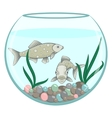 Two green fishes in the round aquarium vector image