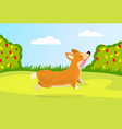 a little dog runs for a walk in garden rose vector image