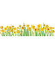 border with multicolor daffodilses vector image vector image