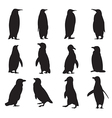 collection penguins silhouettes vector image