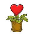 heart love grown as houseplant sketch vector image vector image