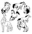 Running horse black and white