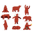 brown grizzly bear cartoon wild cute bears vector image