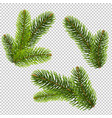 fir tree isolated isolated transparent background vector image vector image