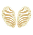 Heart Shaped Rib Cage vector image