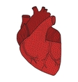 Human heart hand drawn isolated on a white vector image vector image