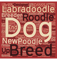 New Designer Dog Breed The Roodle text background vector image vector image