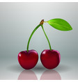 fresh red cherry food berry isolated background vector image vector image