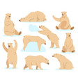 polar white bear arctic snow bear cute north vector image vector image