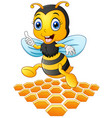 smiling cartoon bee with a honeycomb vector image