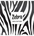 zebra print pattern in black and white vector image vector image