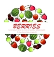 Berry fruit poster for food and drink design vector image