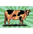 Color spotted farm cow vector image
