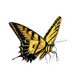 hand drawn sketch butterfly in yellow color vector image vector image