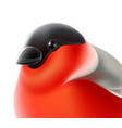 realistic bullfinch bird close up xmas vector image vector image