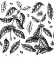 hand sketched coffee plant seamless pattern vector image vector image