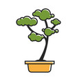 traditional bonsai tree vector image