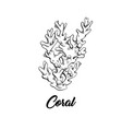 coral black and white vector image