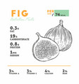 nutrition facts fig hand draw sketch vector image vector image