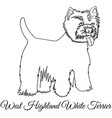 west highland white terrier dog coloring vector image vector image