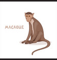 a cartoon bonnet macaque isolated on a white vector image