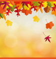 autumn fall card invitation with maple and oak vector image vector image