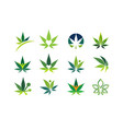 cannabis leaf medical marijuana cbd oil symbol vector image