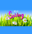 hello spring banner with grass and chamomile vector image vector image