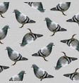 low poly pigeon bird on gray back ground