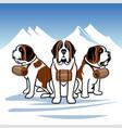st bernards alpine rescue dogs vector image