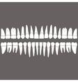 dentition teeth vector image